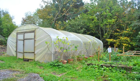 outdoor work polytunnel