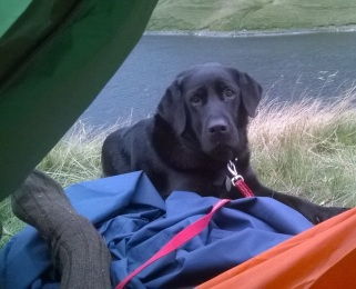keith-budge-and-dog-ullswater1