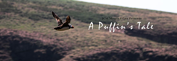 A-Puffin's-Tale---Poster